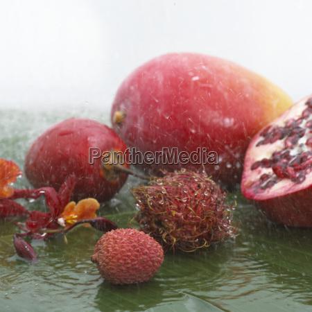 fiore pianta maturo freschezza frutta cadere