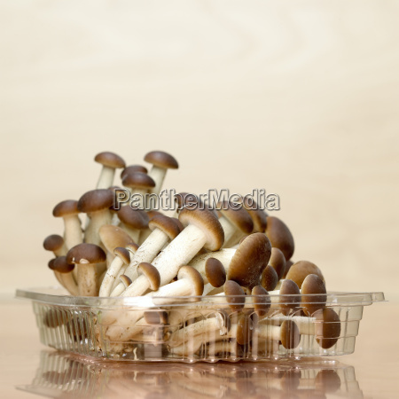 mushrooms in plastic box close up