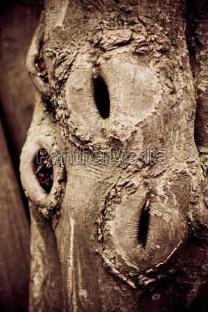 tree log close up