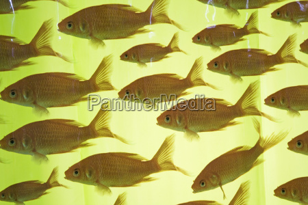 fish on shower curtain