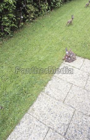 deer figures on lawn in the