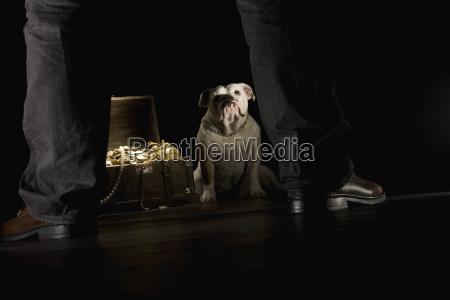 bulldog sitting next treasure chest man