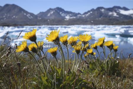 passeio viajar aguas horizonte flor planta