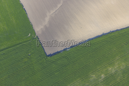 spain andalusia view of green wheat
