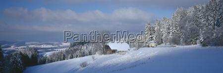 germany baden wuerttemberg schwarzwald breitnau snowscape
