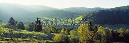 germany baden wuerttemberg schwarzwald woodland feldberg