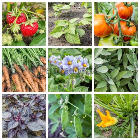 collage with fruits vegetables and herbs