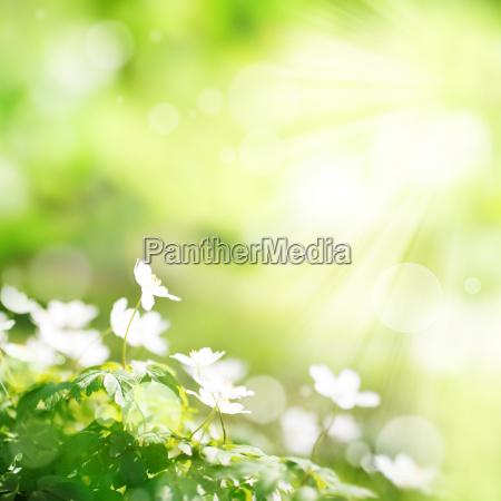 bright green spring background