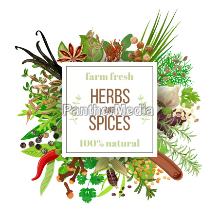 big set culinary herbs and spices