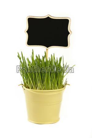 spring green grass with sign in