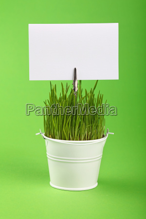 spring grass and sign in bucket