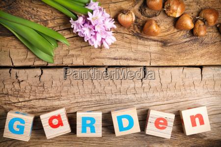 gardening background with flower on wooden