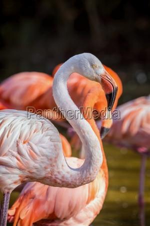 pretty flamingo up close shot