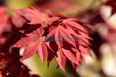 red and green leaves on a