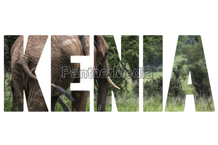 word kenia over wild animals