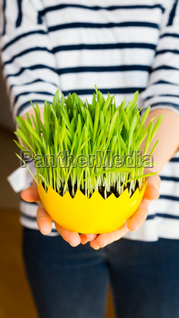 girl giving green oat sprouts for