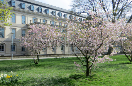 spring on the state parliament