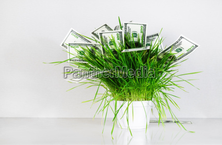 money and grass