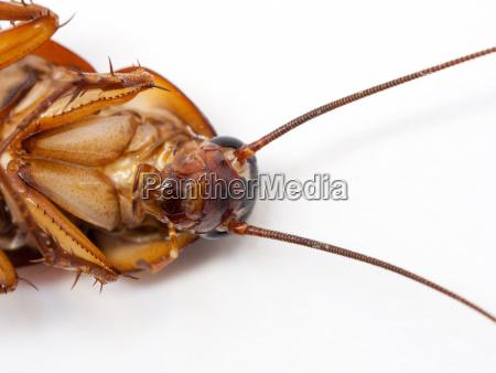 closeup cockroach show details since mid