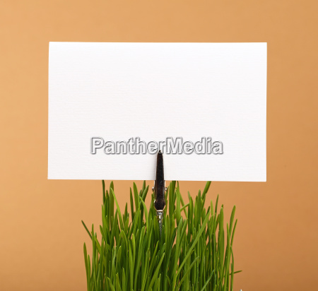 spring green grass and white paper