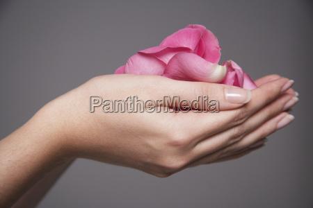 closeup of hands full of petals