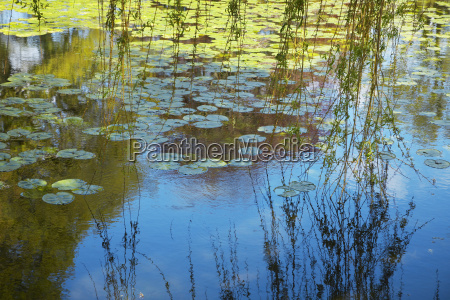 luz hermoso bueno reflexion tranquilidad ramas
