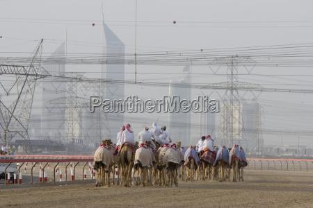 dubai uae camels and jockeys training