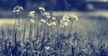 beautiful gentle wildflowers