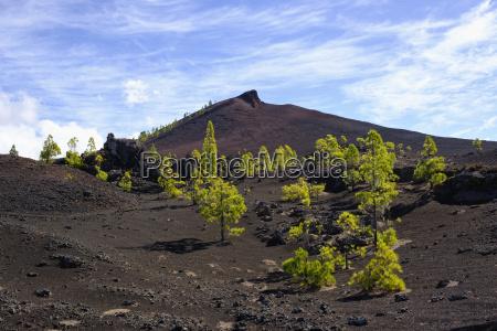 spain canary islands tenerife montana negra