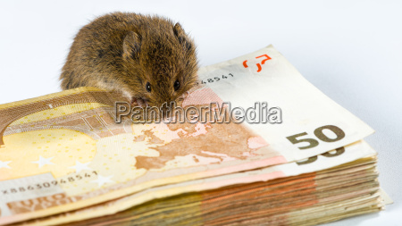 mouse guarding a bunch of euro