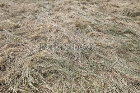 full frame shot of straw