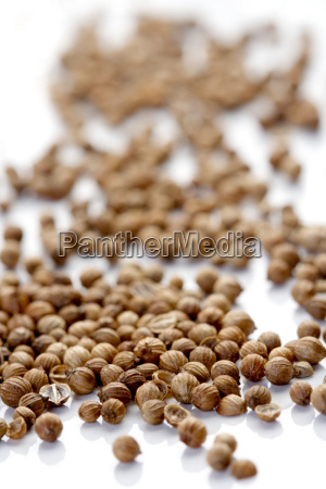 close up of dried mustard seeds