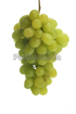 studio shot of grapes on white