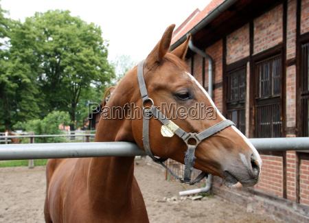 equestrian city celle