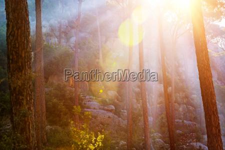 forest in sunset light