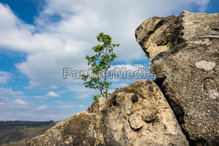 landscape with tree and rocks in