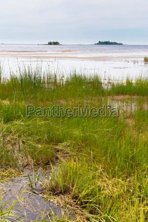 baltic seaside landscape in summer