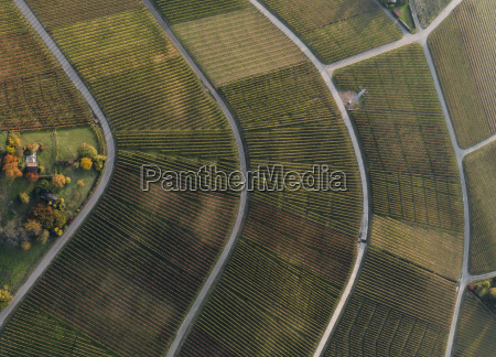 full frame shot of vineyards in