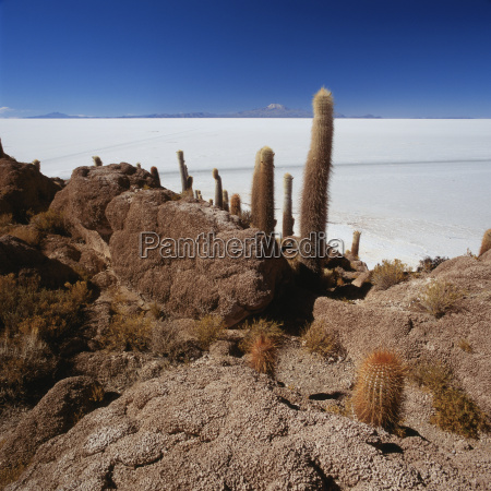 cactus on rock formation in desert