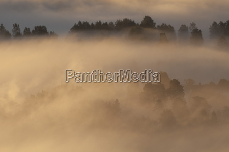idyllic view of fog covered landscape