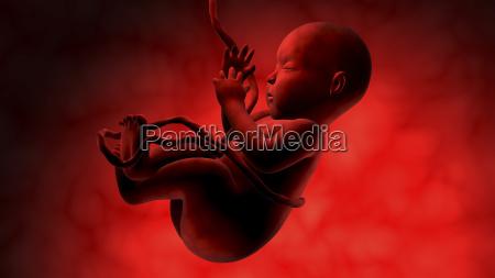 fetus inside womb
