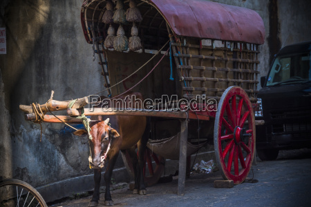 an old oxcart in galle sri