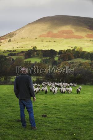 sheep farmer shepherd standing on a