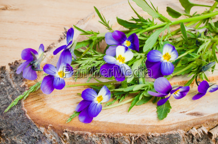 bouquet of spring flowers on a