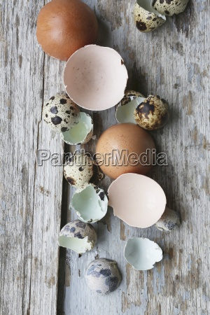 cracked chicken and quail eggs