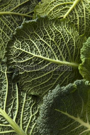 close up detail shot of savoy