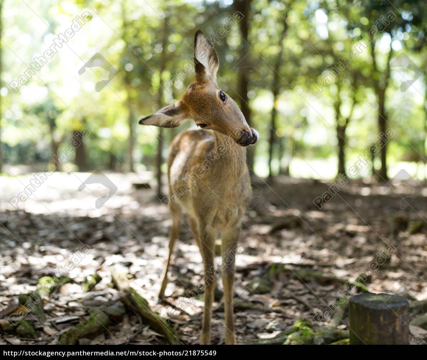 Cute Deer In A Park Stock Photo 21875549 Panthermedia Stock Agency