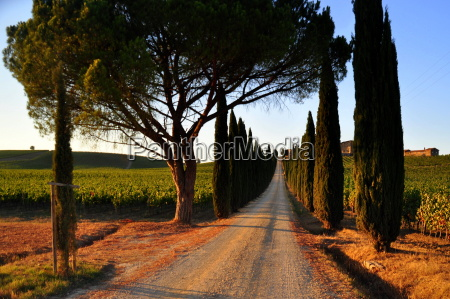 cypress avenue in chianti