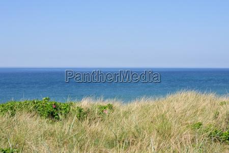 north sea coast with long grasses