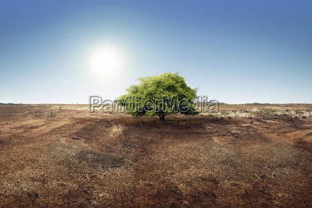 tree on dry land effect of